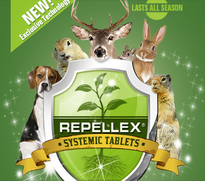 Repellex - Systemic Tablets